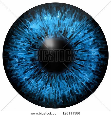 Dark blue eye iris vector texture on white