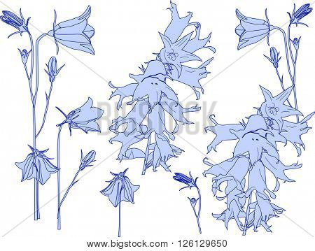 illustration with set of blue flowers sketches isolated on white background