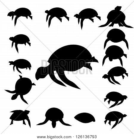 Set tortoise silhouette isolated on white background