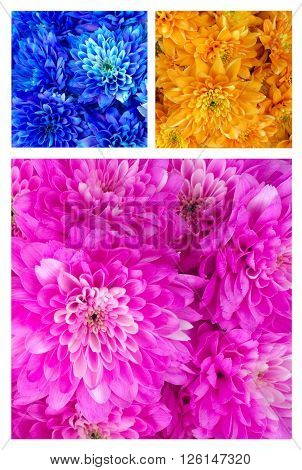 Flowers in a collage