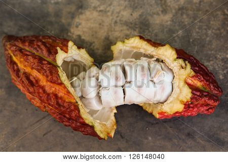A detail view of a cut opened cocoa pod in Huayhuantillo village near Tingo Maria in Peru 2011
