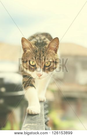This is a photo of cat outside