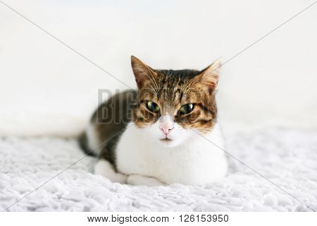 Photo of cute kitten lying in the bed