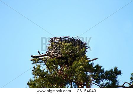 Human made Osprey nest. This Osprey nest is human made and last summer there was a nesting Osprey couple with three chicks