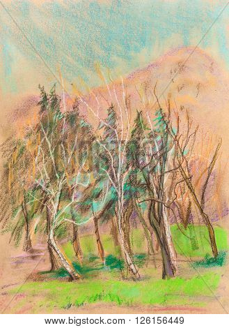 the forest near mountains,  april , sunny day