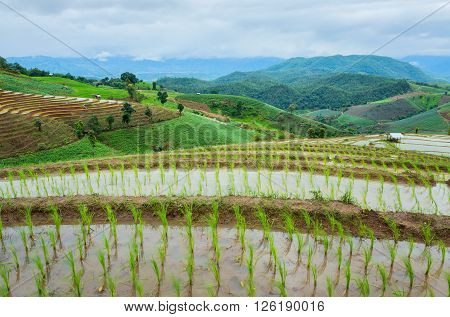 Rice terraces in the rural mountain, thailand