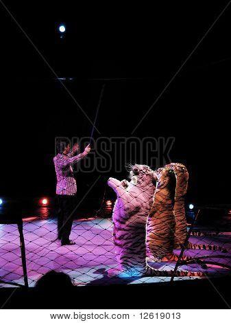 Moira Orfei Circus - Tiger tamer