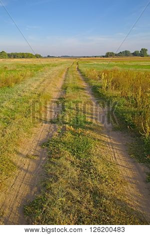 Dirtroad crossing the countryside with green grass