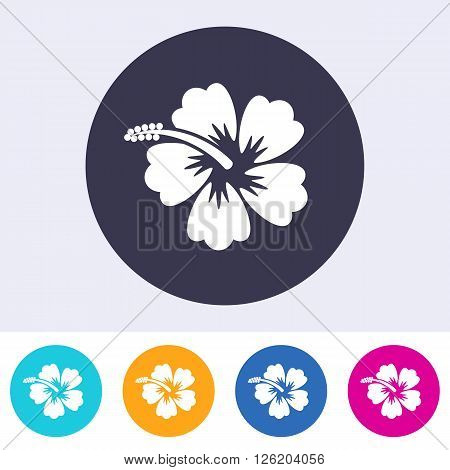 Vector hibiscus blossom icon on round colorful buttons