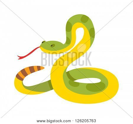 Gold python reticulated albino boa constrictor wildlife nature snake vector illustration.