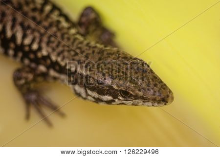amazing lizard body head dotted colorful patern