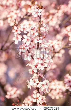 Blossoming Flowers Tree In Park At Early Spring Seson