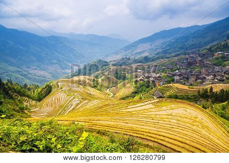 rice terraces landscape in may (village Dazhai Guangxi province China)