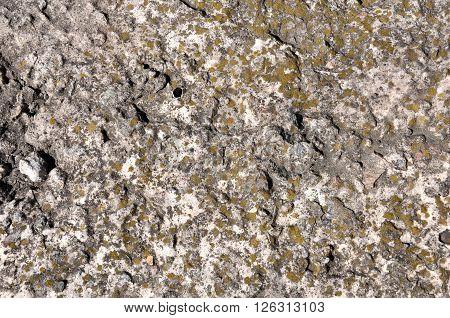 Crimean Coquina Stone Yellow Texture