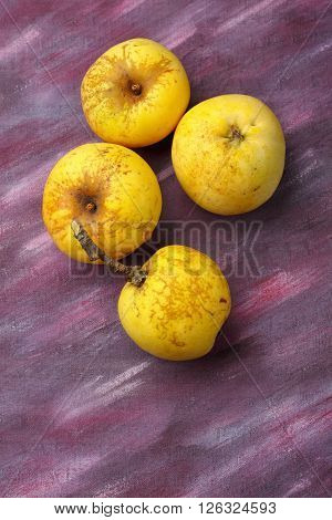 Four yellow organic apples from semi-wild cultivation over painted textile background. Overhead view.