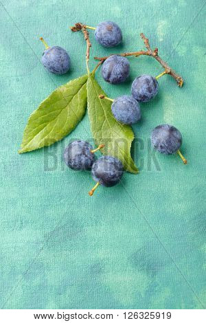 Blackthorn fruits over painted textile background. Overhead view.