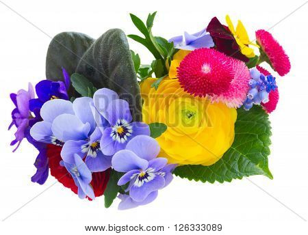 Posy of violets, pansies, daisies and ranunculus isolated on white background