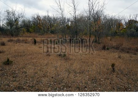 A meadow in the Lake Renwick Heron Rookery Nature Preserve in Plainfield, Illinois, during the autumn. ** Note: Soft Focus at 100%, best at smaller sizes