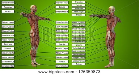 Concept or conceptual 3D human man anatomy and muscle for sport and text on green background poster