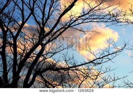 Dramatic Winter Tree Silhouette