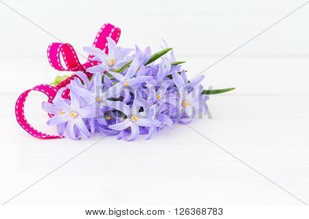 Bouquet Of Spring Flowers Decorated With Ribbon On White Wooden Background. Copy Space. Chionodoxa F
