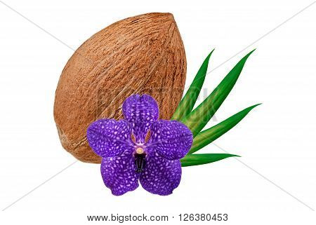 coconut with flower isolated on white background