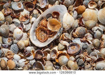 Seashells background. Many sea shells on a beach summer background. Small seashells and sand beach holiday background summer backdrop.