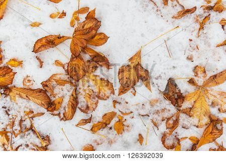 Fallen Foliage On The Snowy Ground
