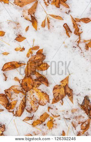 Fallen Foliage On The Snowy Ground