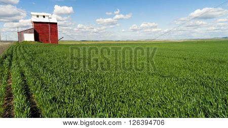 A red and white grain elevator stands in a fresh sping farm planting