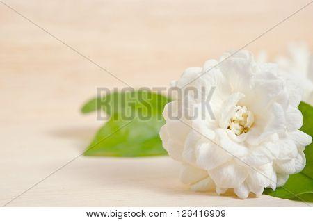 Jasmine (Other names are Jasminum Melati Jessamine Oleaceae) flower isolated on wooden board