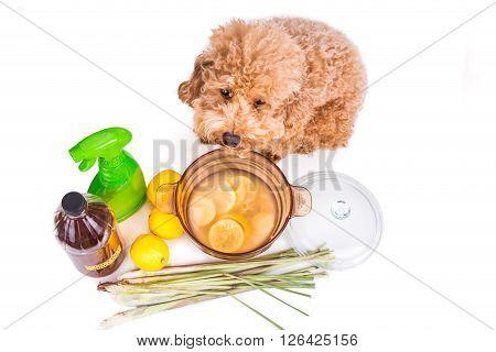 Apple Cider Vinegar, Lemon,  Lemongrass Effective Flea Repellent Home Formula