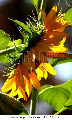 flower garden sun green leaves nature plant summer spring