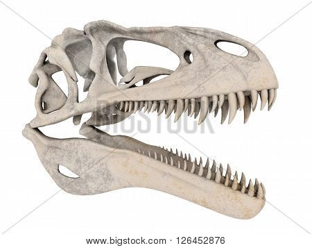 Computer generated 3D illustration with a skull of the dinosaur Acrocanthosaurus isolated on white background
