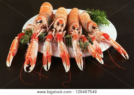 Four Delicious Raw Langoustines with Rosemary on White Plate closeup on Dark Wooden background