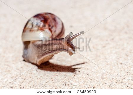 Fast snail. Sunny day. Insect close up