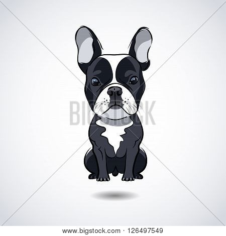 French bulldog isolated on white background. Vector illustration