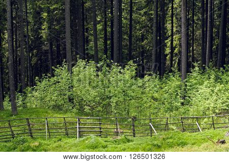 Wooden fence protects desirable tree and plant species from deer damage.