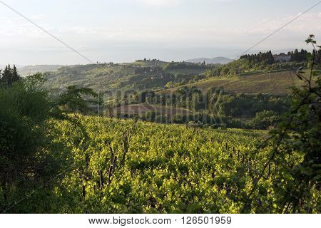 Spring hilly landscape in the evening. Tuscany Italy