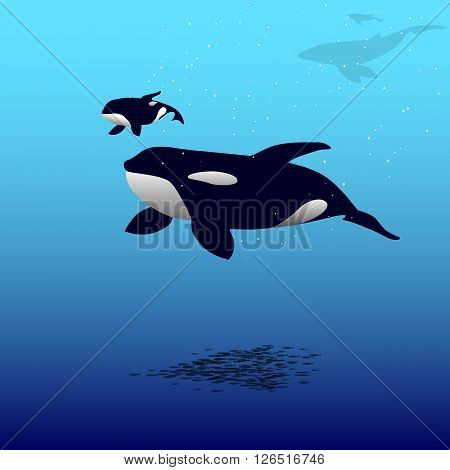 Vector illustration of a killer whale and calf whales. Grampus. Orca whale.
