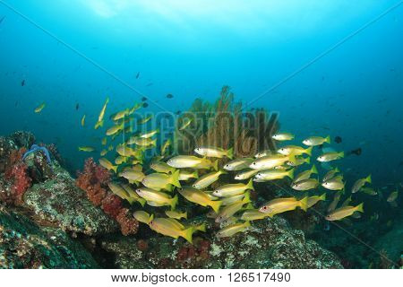 Fish and coral reef in ocean in Thailand