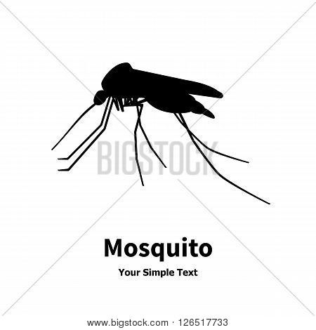 Vector illustration of an insect. The mosquito, gnat, blood-sucking animal. Isolated on white background.