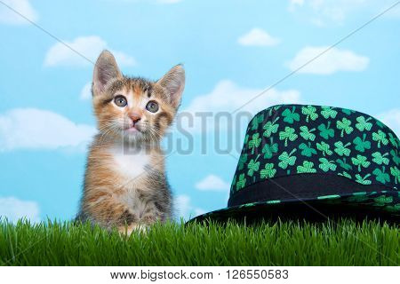 Tortie Tabby Kitten Perched Below Tall Green Spring Grass St Patty's Day Hat