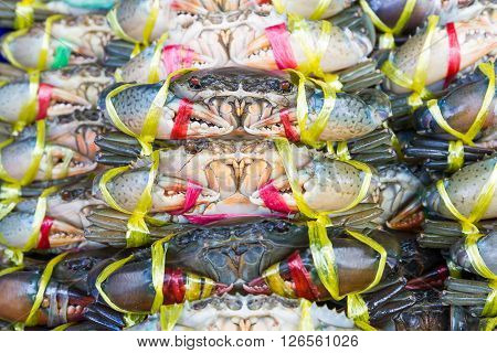 Close Up Black Crab Or Serrated Mud Crab