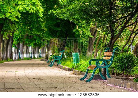 area of ??the old city park with bench under the chestnut tree
