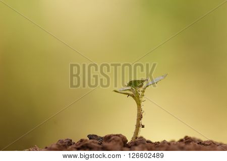 Young dusty sprout grow out of soil with beautiful light. Concept of new beginning, growth,endurance,strength