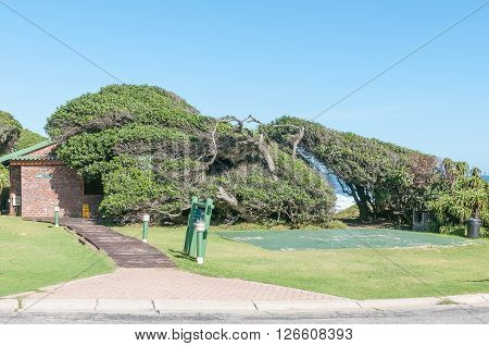 STORMS RIVER MOUTH SOUTH AFRICA - FEBRUARY 28 2016: A camping site and ablution facilities at the rest camp. The shape of the trees is due to the fierce winds constantly blowing from the sea