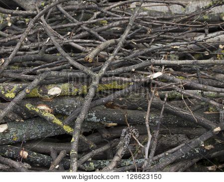 Pile of chopped firewood stock bole wood