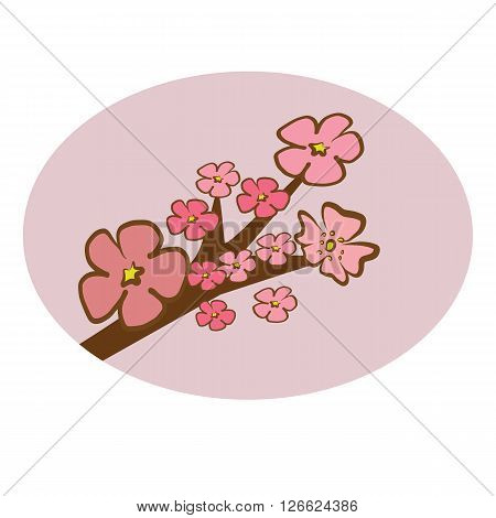 Cherry Blossom branch illustration vector with pink petals flower on circle pink tone