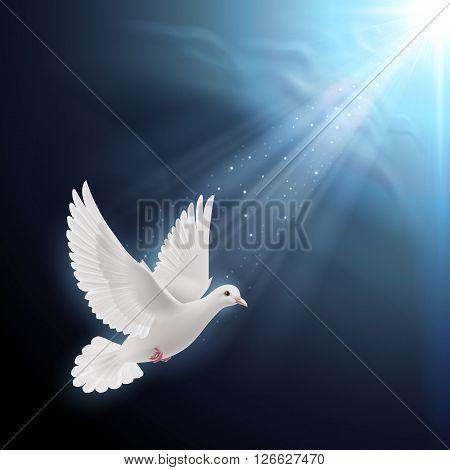 White dove flying in sun rays against dark blue sky. Symbol of peace